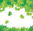 Vector of green leaves.