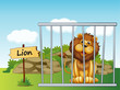 A lion in a fence