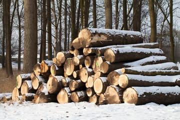 Abholzung Holzstämme im Wald
