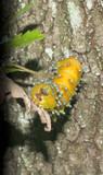 A yellow worm grub caterpillar poster