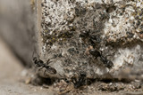 Ants running on rocks