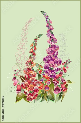 Greeting card with a foxglove. Illustration  foxglove.