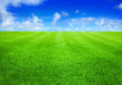 canvas print picture - green grass and blue sky