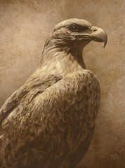 vintage eagle photo