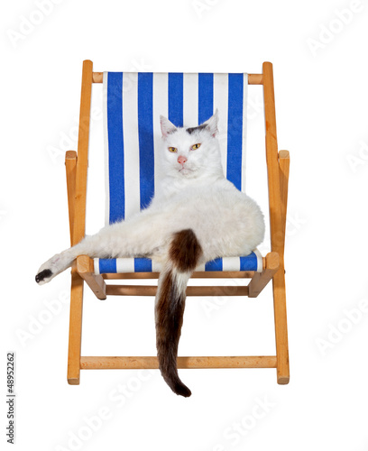 Pampered cat on a deckchair