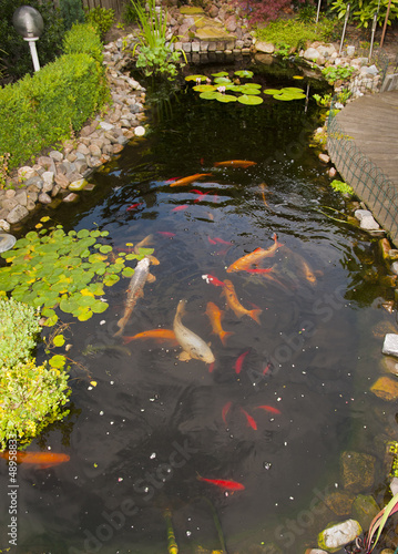 Pond with koi and goldfish