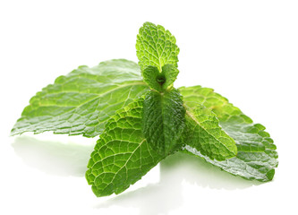 Mint isolated on white