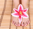 beautiful manicured female bare feet with pink lily flower
