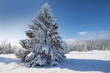 winter landscape with big snow covered spruce tree