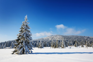 winter landscape with big snow covered tree