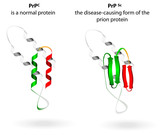 Normal protein and prion diseases. Vector scheme