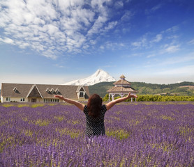 Beautiful lavender field in hood river