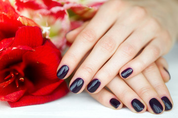 Closeup fingernails with dark manicure and red flowers