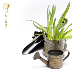 Grass in a flowerpots, watering can and garden tools