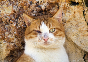 the blind street cat in front of the rocks