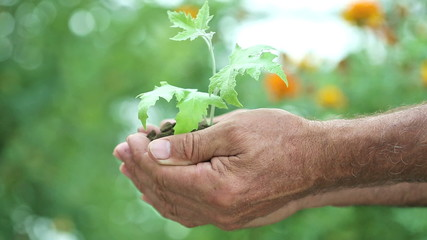 Child and senior man holding green plant in hands