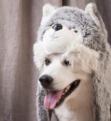 dog dressed up like cat