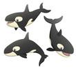 Orca Set
