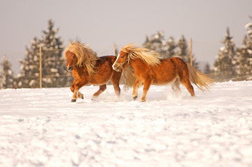 running horses in winter