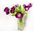 purple tulips on white wooden table