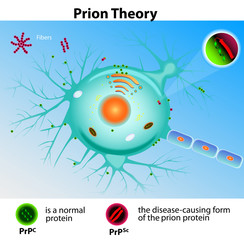 Prion Theory. Mad Cow Disease