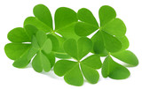 Shamrock or clover leaves