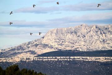 Vol de palombes dans la Montagne Sainte Victoire en Provence