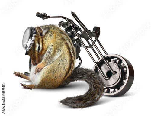 Funny chipmunk biker with motorcycle
