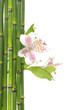 violet orchid and green bamboo