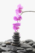 Stack stones in balance with branch pink orchid