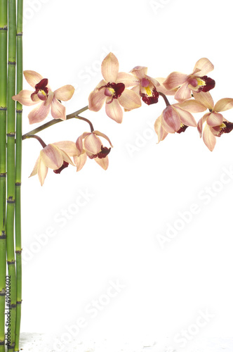 branch orchid flower and green bamboo sticks