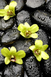 Set of green orchid on the black zen stones in water drops