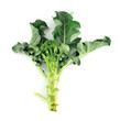 Fresh Broccoli over white background