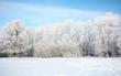 Russian winter in January
