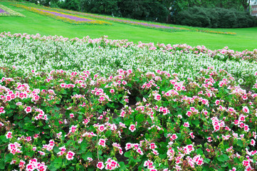 Beautiful flowerbed in city park