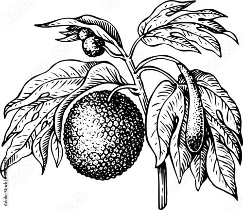 图新鲜果汁桃子水果热带异国情调糖粮食
