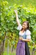 Junge Frau im Weingarten neben Weinreben