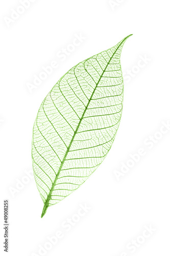 canvas print picture Feuille verte transparente