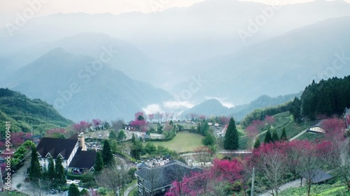 Sakura pink flower on mountain in taiwan, cherry blossom