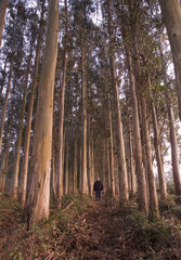 Man in a eucalyptus forest