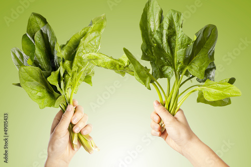 Hands holding a leaves chards. A green background