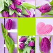 Tulips collage