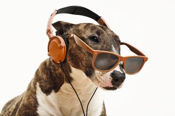 Hund mit Sonnenbrille und Kopfhörern