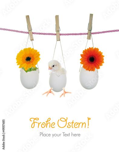Frohe Ostern mit Küken und Blumen in Eierschalen