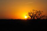 Fototapeta afryka - słońce - Dziki pejzaż