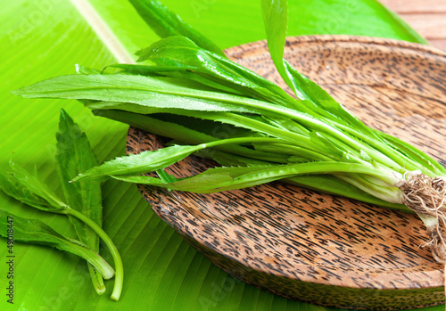 Asian tropical parsley freshness cooking vegetable