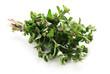 Herbs Series - Majoram