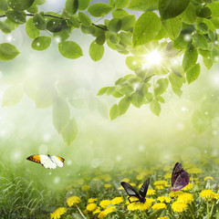 spring background . dandelion in a meadow and butterfly