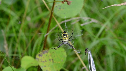 hand pincette feed wasp spider scare retreat