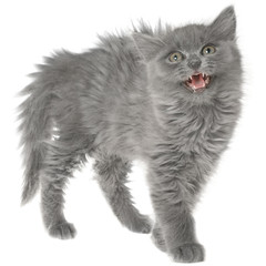 Frightened gray kitten isolated